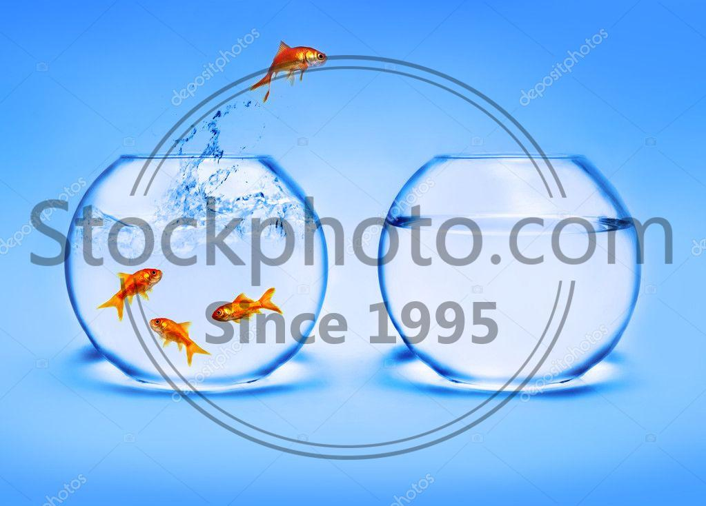 Stock photo of Goldfish jumping out of the water - Goldfish jumping out of the water