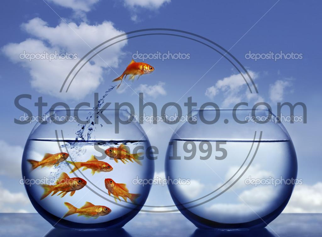 Stock photo of Goldfish jumping out of the water - Goldfish jumping out of the water from a crowded bowl