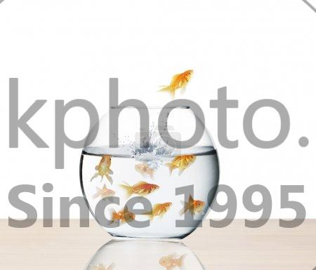 Stock photo of goldfish jumping out of  water  - Goldfish jumping out of the water